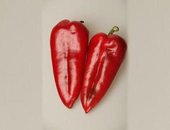 Vreme setve paprike